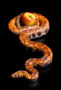 apple pythonS