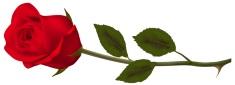 Rose-Transparent_Red_RoseS