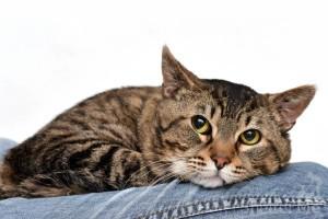 Gunnar - San Francisco Animal Care & Control