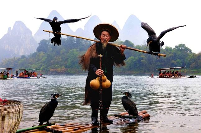 4cormorants-fishing-china